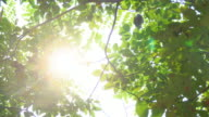 Sunlight seen through branches the leaves. 4K format