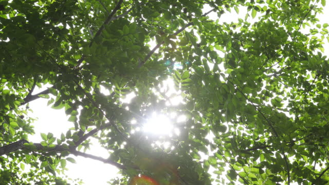 Sunlight seen through branches