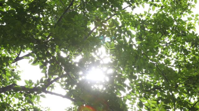 Sonnenlicht durch Filialen gesehen