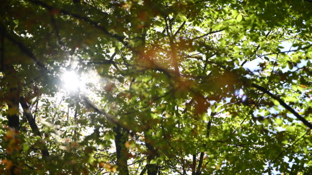 Sunlight seen through branches ( YEDI GOLLER BOLU - TURKEY )