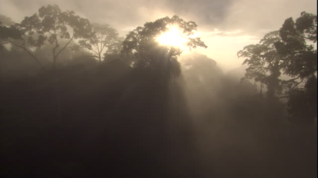 Sunlight shines through a thick mist shrouding the rainforest of Sabah, Borneo. Available in HD.