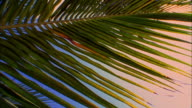 Sunlight shines through palm tree leaf moving gently in breeze, Belize Available in HD.