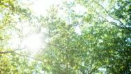 Zonlicht schijnt door boom laat time-lapse