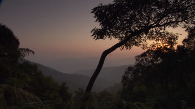 Sunlight silhouettes trees in Bwindi National Park. Available in HD.
