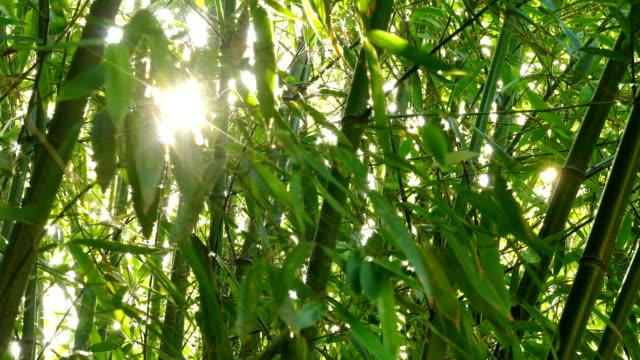 sunlight through bamboo leaves
