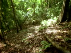 T/L sunlight through forest canopy, casts light across forest floor, MS, Panama.