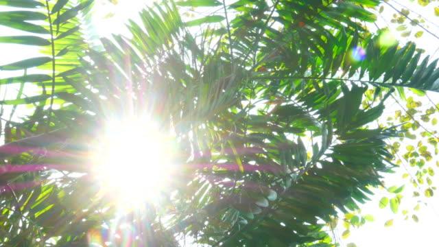 Sonnenlicht durch Blatt