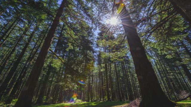 Zonlicht door oude bos