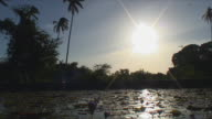 WS LA Sunlit pond with water lily / Stone Town, Tanzania