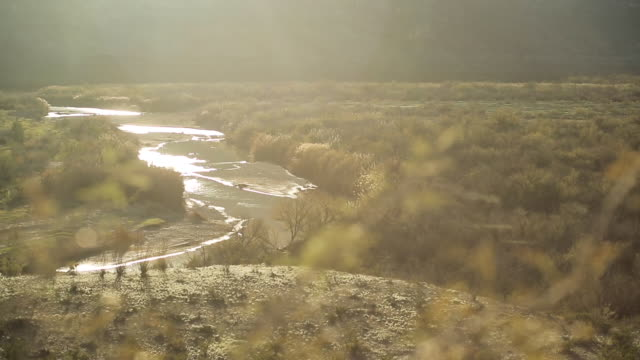 Sunlit river through blurred vegetation in foreground