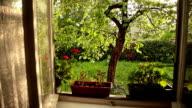 HD: Sunny Garden in The Rain