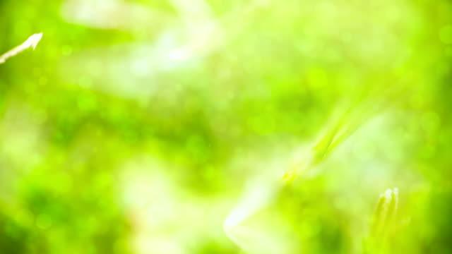 Soleggiato sfondo verde