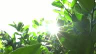 Sunny on the tree