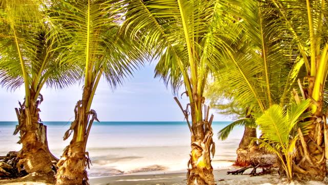 Sunny palm tree and sea