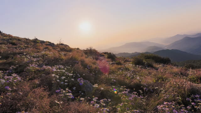 WS T/L PAN Sunrise and Landscape of Jirisan mountain with swaying wildflowers / Sancheong, Gyeongsangnamdo, South Korea