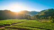 4K: Sunrise en mist op uitzicht op de bergen in het noorden van thailand