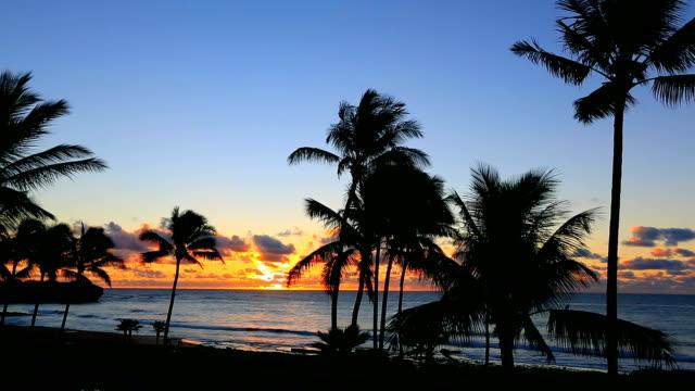 Sunrise achter palmbomen