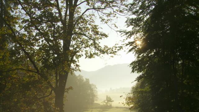 T/L Sunrise In Foggy Landscape