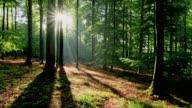 Sunrise in the forest, Spessart, Franconia, Bavaria, Germany