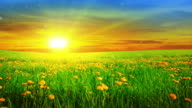 Sonnenaufgang über dem Feld