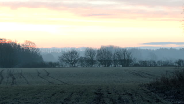 Sunrise over misty grove