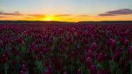 T/L Sonnenaufgang über dem Gebiet der crimson clover