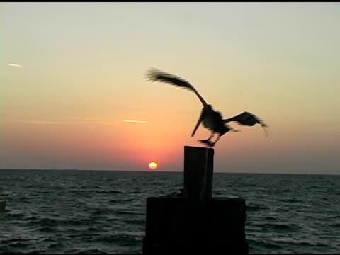 Sunrise Pelican 1