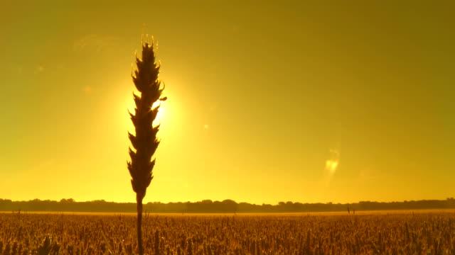 HD CRANE: Sunrise Sky Over The Countryside