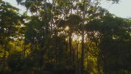 4K Sunset Aerial View of trees and the sun, Australia.