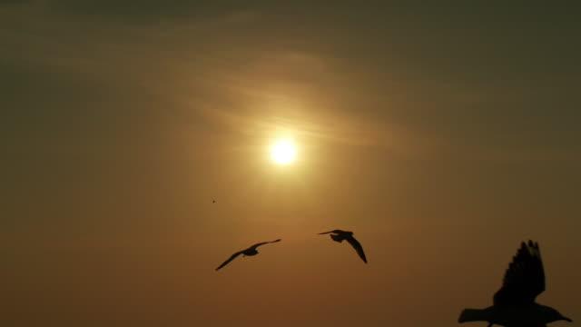 Sonnenuntergang und eine Schar Seaguls