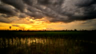 sunset in rice field at thailand