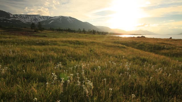 sunset in the mountains in the meadow of edelweiss film vid o getty images. Black Bedroom Furniture Sets. Home Design Ideas