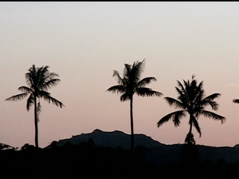 Sunset in the Palm Trees