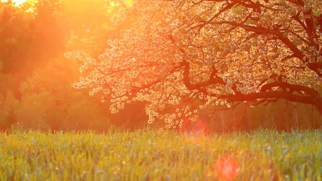 Sonnenuntergang Landschaft in HD