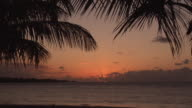 MS Sunset on Beach Manuel 'Nolo' Morales at Dorado, palm trees in foreground, Puerto Rico, USA