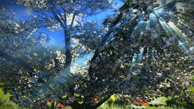 Sunset orchard - flythrough