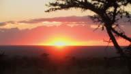 WS, Sunset over savanna, Laikipia, Kenya