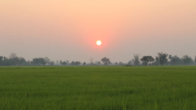 Sunset over the rice field (Time lapse).