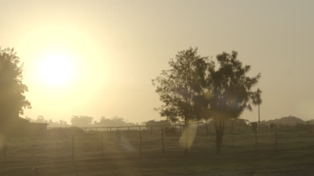 Sunset shot of field and trees with silhouetted cows grazing with sun flare/ Western Cape/ South Africa