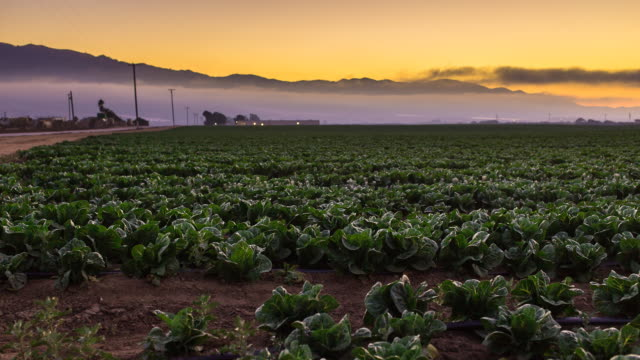 Sunset Timelapse of Salinas Lettuce Farm