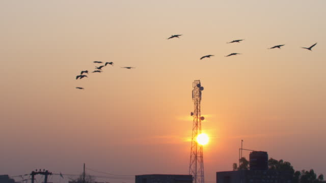 Sunset WA with SLO MO group of Demoiselle cranes flying left over city with buildings and aerial in background
