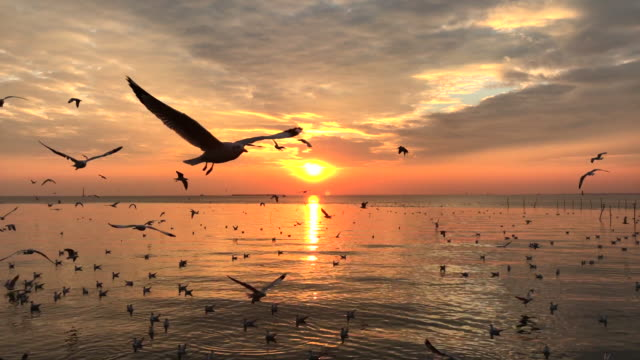Sunset with Bird in Natural, Seagull flying