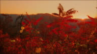 Sunset with red leaves, Virginia