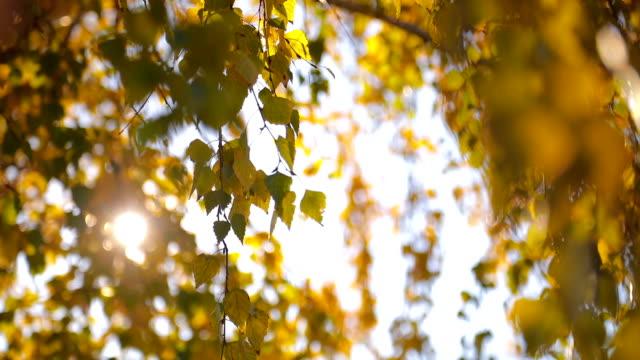 Sonnenschein und Blätter