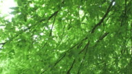 PAN TU Sunshine through tree branches with green leaves