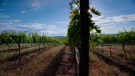 Sunshine Vineyard
