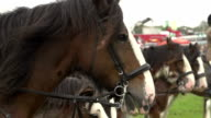Super Slow Motion HD - Horses waiting to race