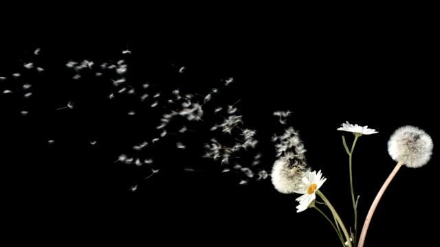 Super Zeitlupe, HD: Blasen einem Bündel von Wildblumen