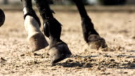 HD Super Slow-Mo: Horse Hooves Kicking Sand