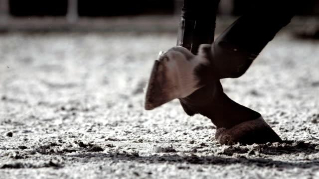 HD Super Slow-Mo: Horse Hooves Kicking Sand